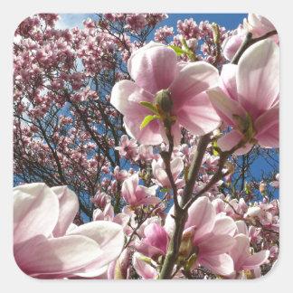 Pegatina Cuadrada Magnolia salvaje 02