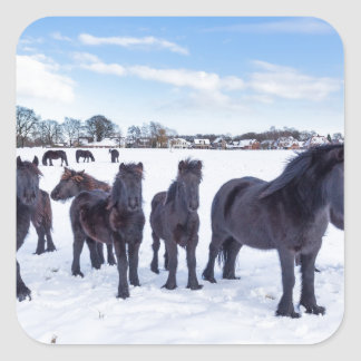 Pegatina Cuadrada Manada de los caballos negros del frisian en nieve