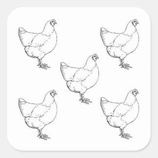 Pegatina Cuadrada Multitud de los pollos de la raza de la herencia -