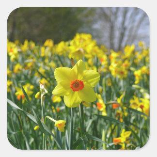 Pegatina Cuadrada Narcisos amarillo-naranja 01,0