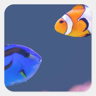 Pegatina Cuadrada Natación de los pescados del surgeonfish y del