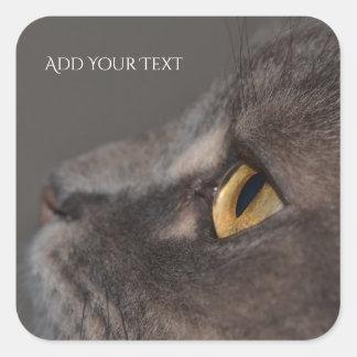 Pegatina Cuadrada Ojo-Macro del gato de Shirley Taylor