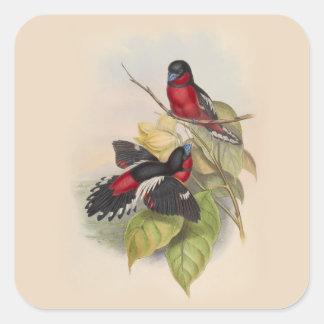 Pegatina Cuadrada Pájaros 002 del vintage
