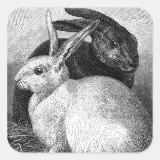 Pegatina Cuadrada Pegatinas de los conejos
