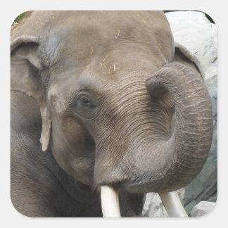 Pegatina Cuadrada Pegatinas del tronco del elefante