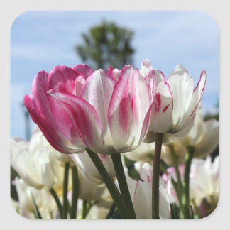 Pegatina Cuadrada Pegatinas del tulipán