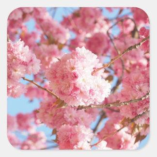 Pegatina Cuadrada Pegatinas japoneses rosados de la flor de cerezo