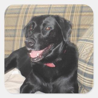 Pegatina Cuadrada Pegatinas negros de Labrador (hoja de 20)