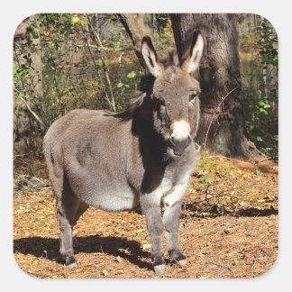 Pegatina Cuadrada Pequeño burro