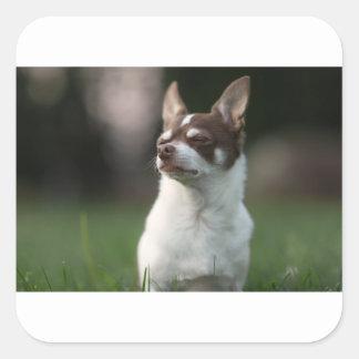 Pegatina Cuadrada perro
