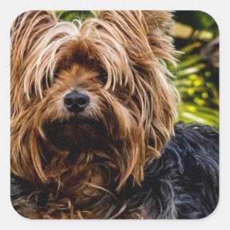 Pegatina Cuadrada Perro casero de Yorkshire Terrier