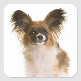 Pegatina Cuadrada Perro de perrito de Papillon - perritos del amor,