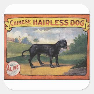 Pegatina Cuadrada Perro sin pelo chino