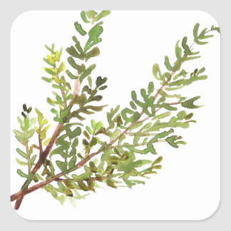 Pegatina Cuadrada Pintura del watercolour de Rosemary de la hierba