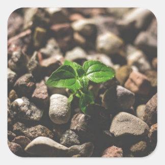 Pegatina Cuadrada Planta frondosa verde que comienza a crecer en los
