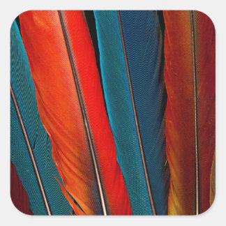 Pegatina Cuadrada Plumas de cola del Macaw del escarlata