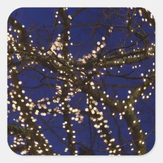 Pegatina Cuadrada Ramas con luces de navidad y un cielo azul marino