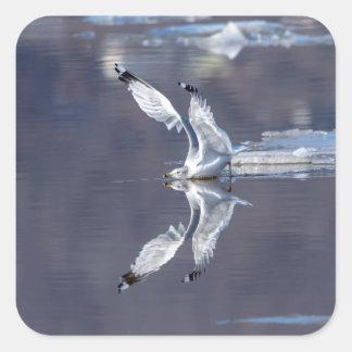 Pegatina Cuadrada Reflexiones de la gaviota