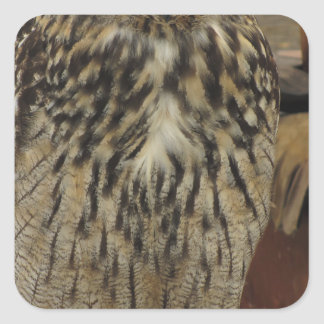 Pegatina Cuadrada Retrato del búho largo-espigado. Otus del Asio,