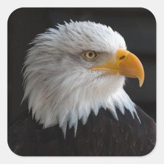 Pegatina Cuadrada Retrato hermoso del águila calva