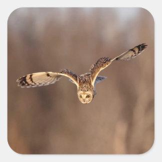 Pegatina Cuadrada salto Cortocircuito-espigado del búho hacia la