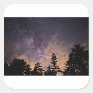 Pegatina Cuadrada Silueta de árboles en la noche