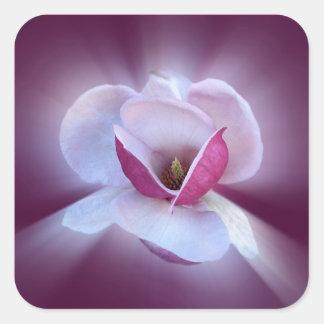 Pegatina Cuadrada sombras rosadas de la magnolia