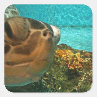 Pegatina Cuadrada Sorpresa de la tortuga de mar