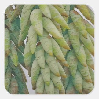 Pegatina Cuadrada Succulent de la cola del burro