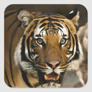 Pegatina Cuadrada Tigre siberiano