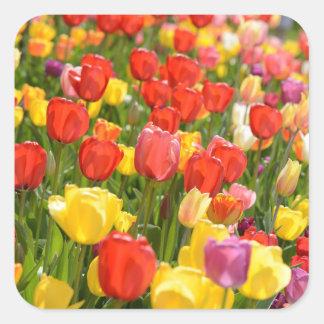 Pegatina Cuadrada Tulipanes en el jardín