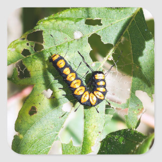 Pegatina cuadrado de Caterpillar de la paleta