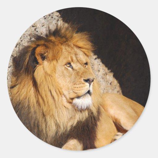 Pegatina de la foto del león