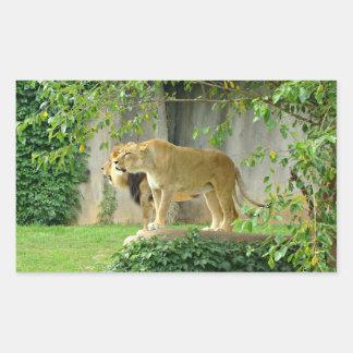 Pegatina de la leona del león