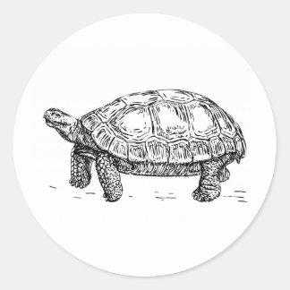 Pegatina de la tortuga/de la tortuga