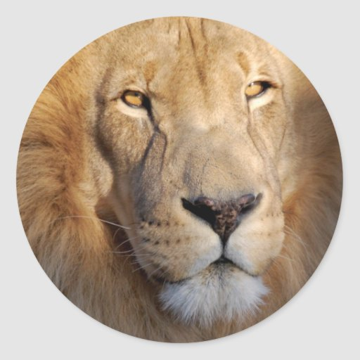 Pegatina de las imágenes del león