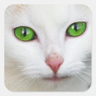 """Pegatina de los """"ojos verdes"""" del gatito"""