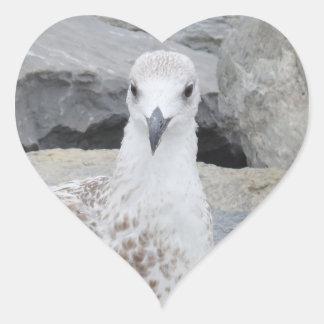 Pegatina del corazón de la gaviota