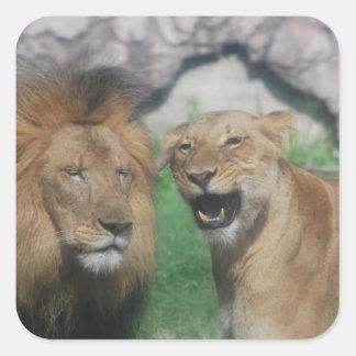 Pegatina del león de la mamá y del papá
