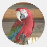 Pegatina del Macaw del escarlata