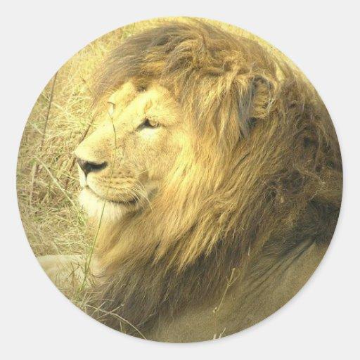 Pegatina del orgullo del león