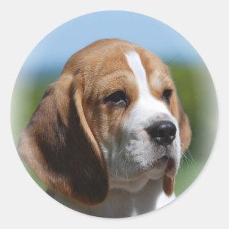 Pegatina del perrito del beagle