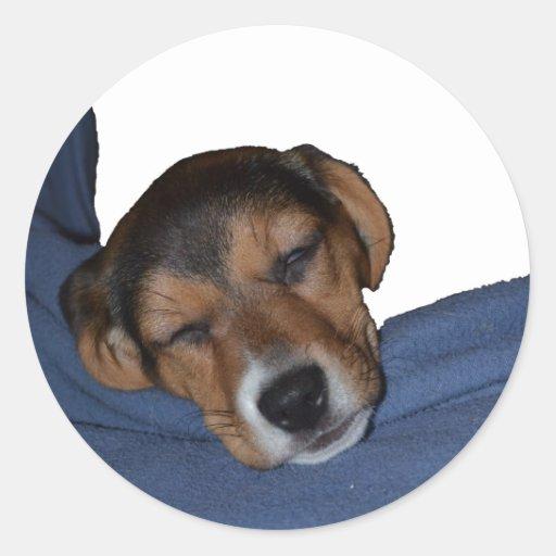 Pegatina durmiente del perrito del beagle