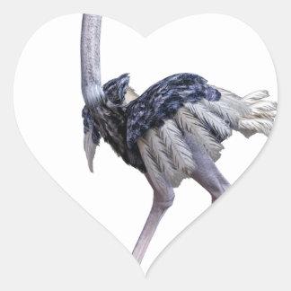 Pegatina En Forma De Corazón Avestruz
