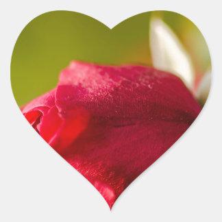 Pegatina En Forma De Corazón Diseño ascendente del cierre del rosa rojo