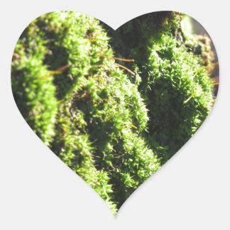 Pegatina En Forma De Corazón El musgo verde en el detalle de la naturaleza del