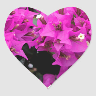 Pegatina En Forma De Corazón Fondo fucsia púrpura del Bougainvillea