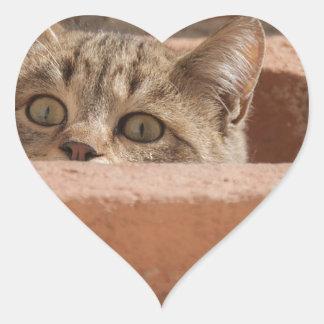 Pegatina En Forma De Corazón Gato montés joven curioso de la atención de los