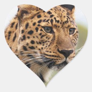Pegatina En Forma De Corazón Gatos salvajes del leopardo