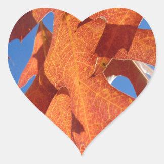 Pegatina En Forma De Corazón Hojas del roble rojo
